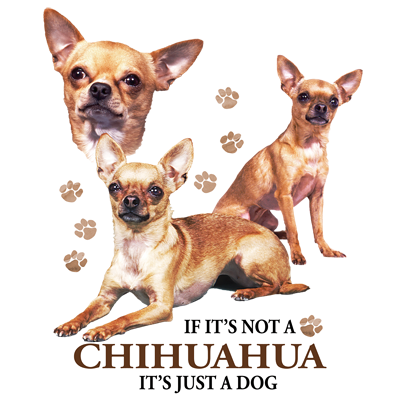 If It's Not a Chihuahua It's Just a Dog