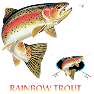 Rainbow Trout Profile Fishing
